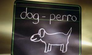perro dog pizarra dibujo