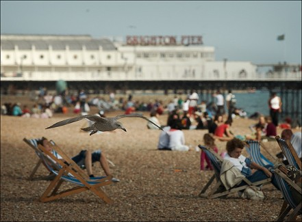 Brighton Seagull by Sam Javanrouh
