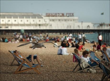 Brighton Seagull by Sam Javanrouh