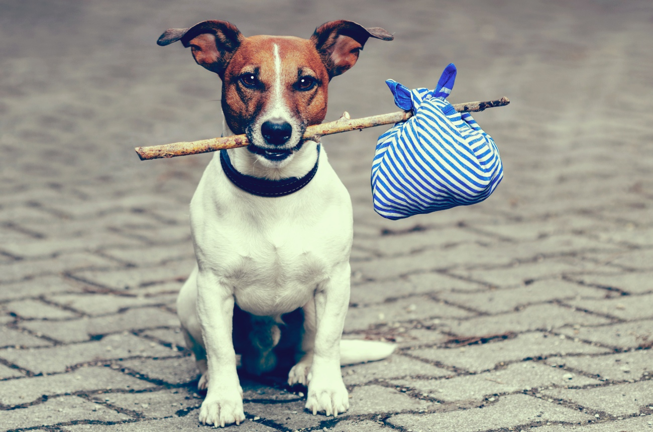 Dog-moving-stuff