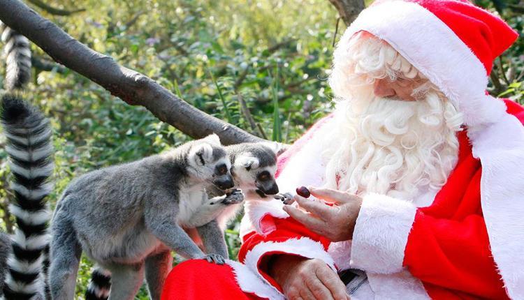 Santa Claus en el Zoo de Bristol 2
