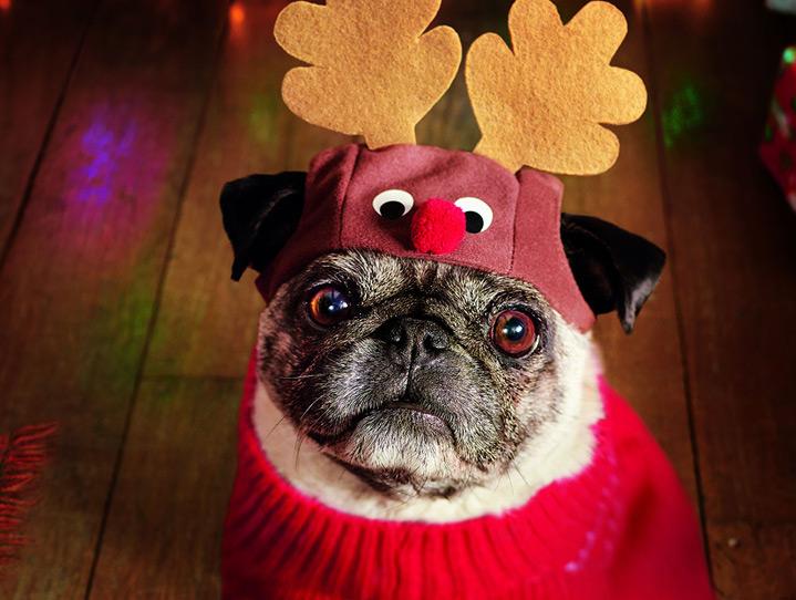 perro vestido de reno