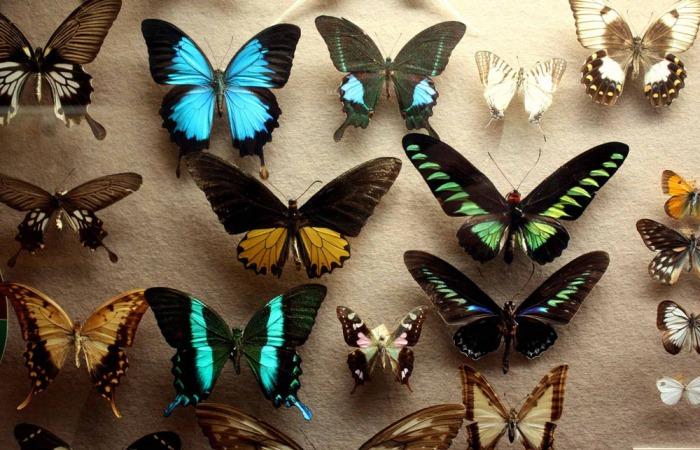 butterflies_1000px