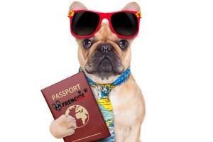 Viajar con tu perro en el avión