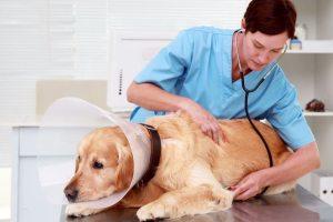 Cómo trabajar de veterinario en Reino Unido