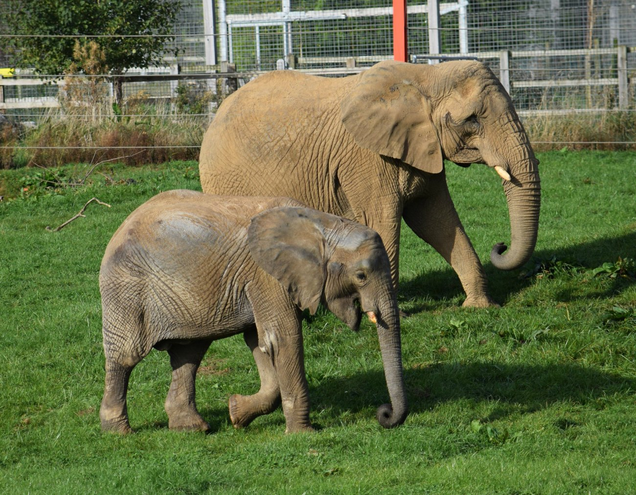 Noah's Ark Zoo Farm, en Somerset