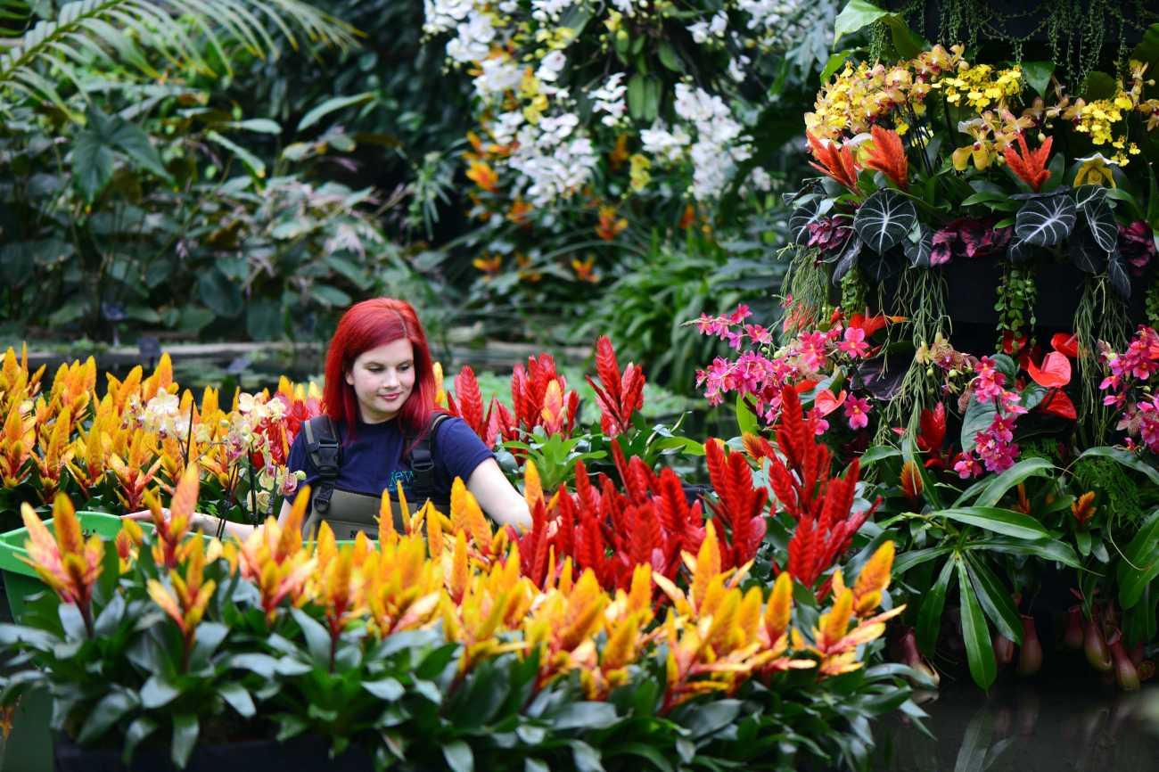 Festival de Orquídeas en Kew Gardens, Londres